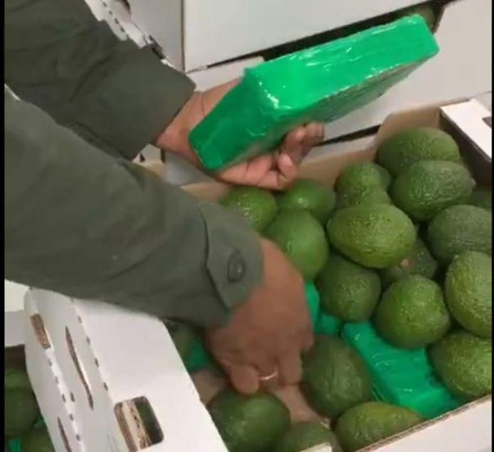 In elk doos met avocado's was de bodem bedekt met pakken van 1 kg cocaïne.