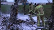 Vreemde brand: knotwilgen vatten plots vuur in midden van weide