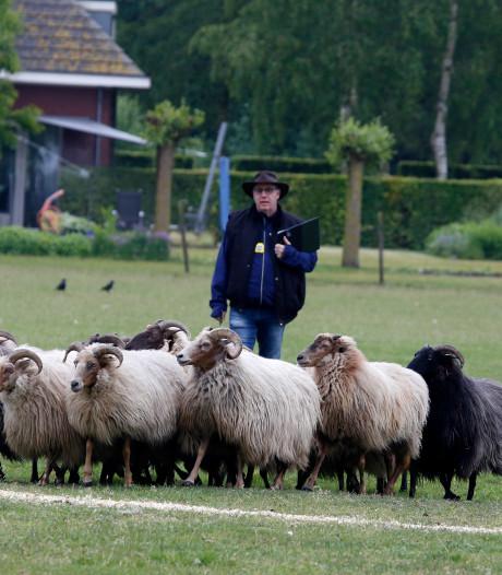 Tien witte schapen en vijf zwarte... kan een hond tellen?