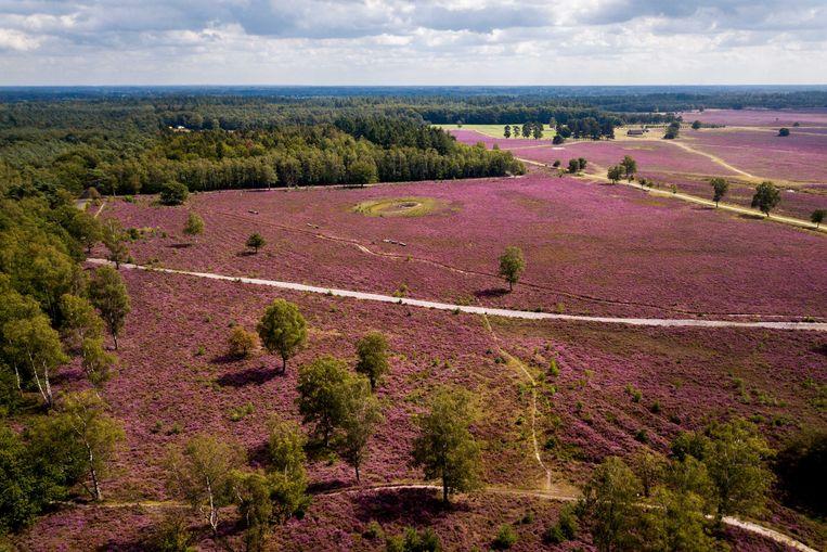 De Veluwe is bij uitstek geschikt voor wateropslag, wat kan zorgen voor een verhoogde biodiversiteit.  Beeld ANP