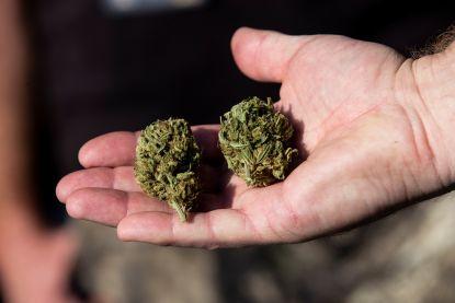 Cannabisplantage ontdekt bij bejaard echtpaar in Vilvoorde