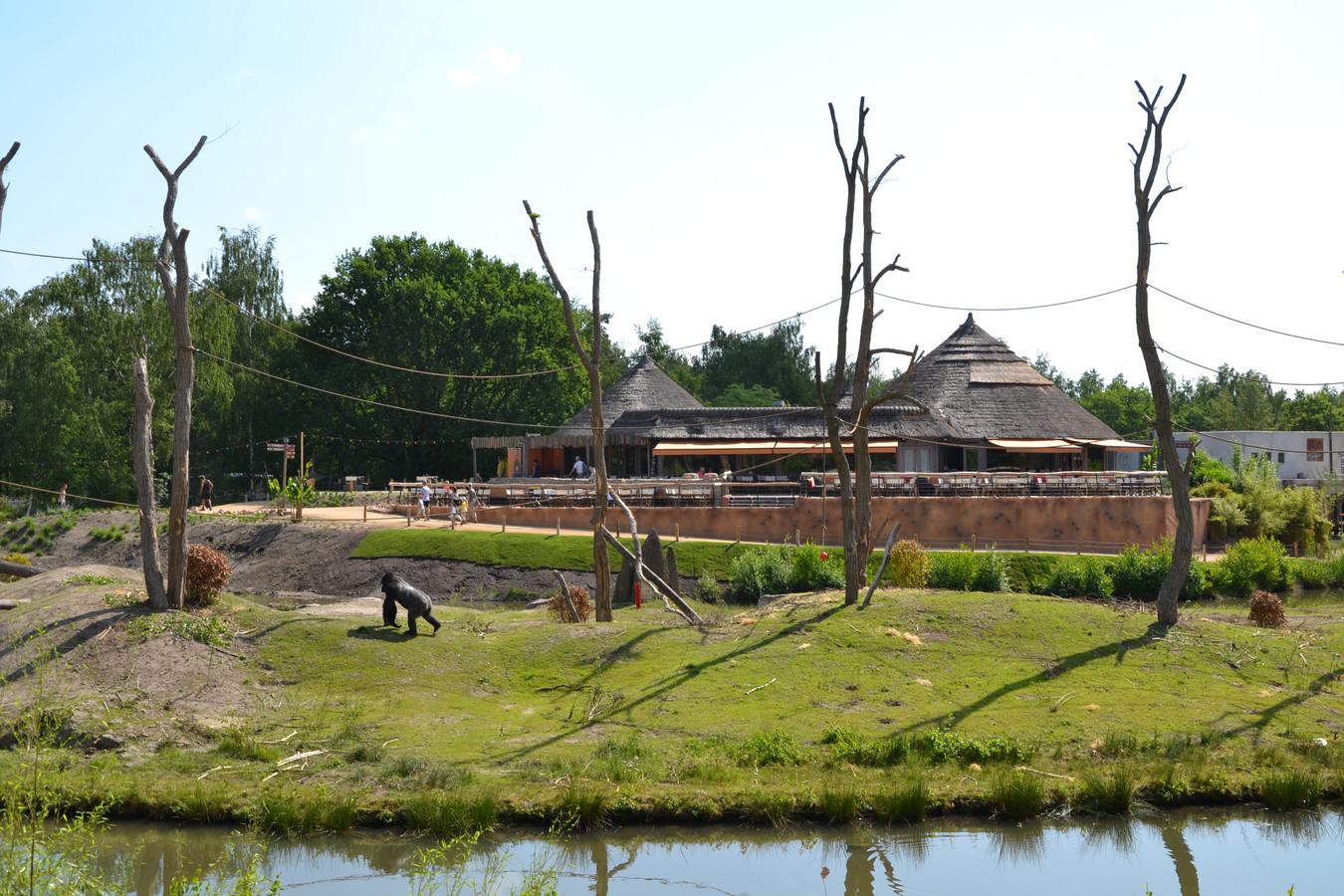 Het uitgebreide gorilla-eiland met erachter het Safari-restaurant en terras.