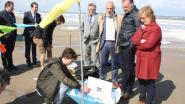 Drieduizend bootjes vormen front van Oostende tot Zeebrugge