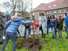 Een boom vol symboliek in Wanneperveen