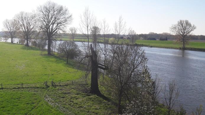 Bakenbomen langs de Maas bij Niftrik.