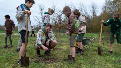 Were Di plant 2.075 bomen als compensatie voor nieuwe scoutslokalen
