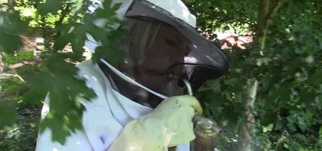 60.000 bijen in de tuin: Iedereen kan imker worden