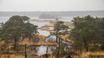 Code oranje voor Kalmthoutse Heide