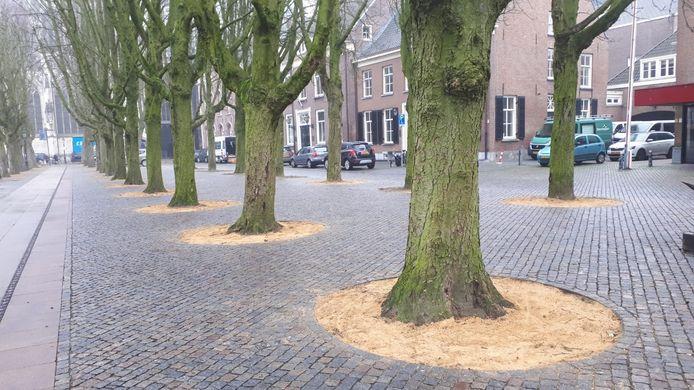 Wit zand rondom de bomen op de Parade
