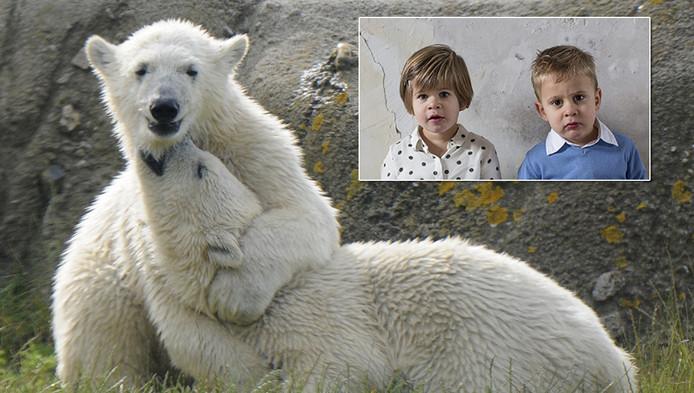De ijsberentweeling vermaakt zich in Diergaarde Blijdorp. Inzetje: Sizzel en Todz, de kleinkinderen van Corrie Hokken die de namenwedstrijd heeft gewonnen.