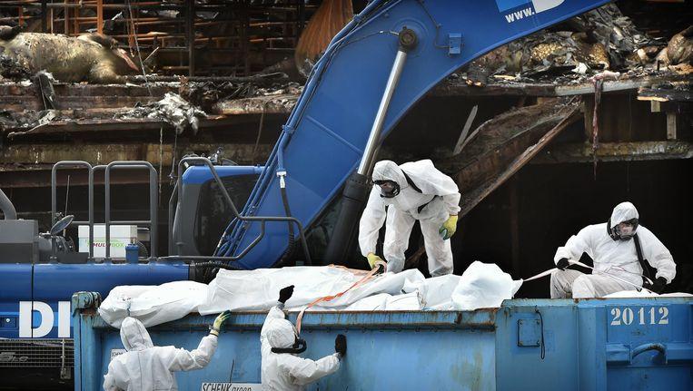 Op de Knorhof in Erichem is donderdag begonnen met het opruimen van de 20 duizend kadavers Beeld null