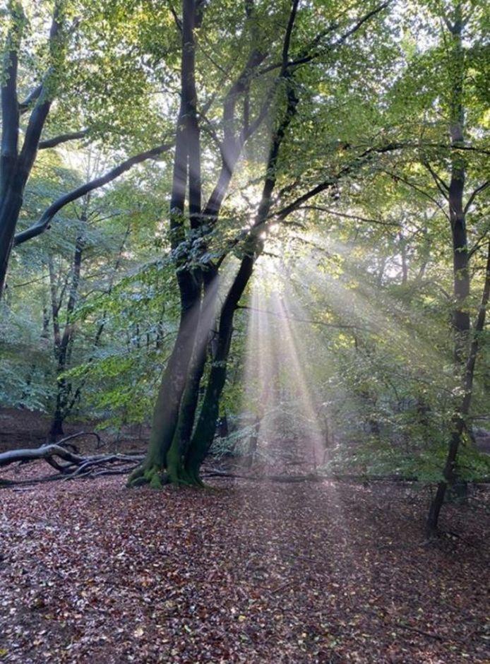 Zonnestraaltjes in het park bij Kasteel de Haar.