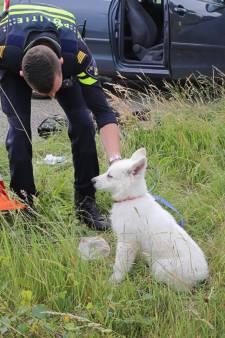 Vrouw botst tegen boom in Hapert nadat puppy op achterbank haar aandacht vraagt