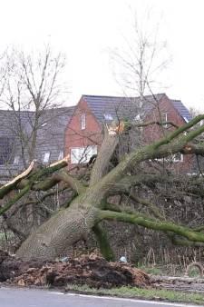 Grote boom valt om bij reparatie waterleiding: watertappunt ingericht in Lunteren
