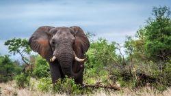 Namibië moet 1.000 wilde dieren verkopen door extreme droogte