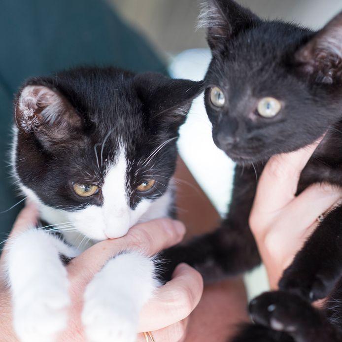 Jonge kittens die bij het Noordbroek zijn opgevangen