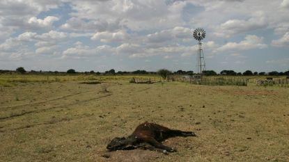 Onze honger naar vlees en soja put Latijns-Amerikaanse grond uit