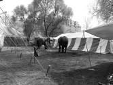 Olifanten op het Smakkelaarsveld, in 1994 kon het nog 🐘