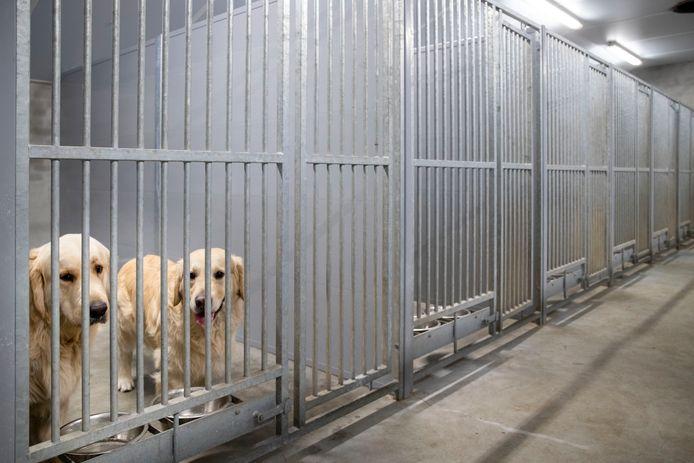 Lege hokken bij de hondenpensions in de regio. Bijna alle boekingen zijn geannuleerd sinds de reissector plat ligt en mensen thuis werken.