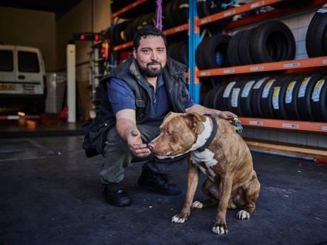 Hamza mag op bezoek bij de gevangen kuipkippen in Emmen: 'Wel een eind rijden'