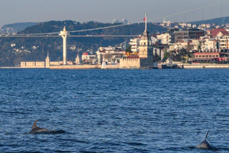 Ook in de Turkse stad Istanbul profiteren waterdieren momenteel van de verplichte rust op en langs het water.