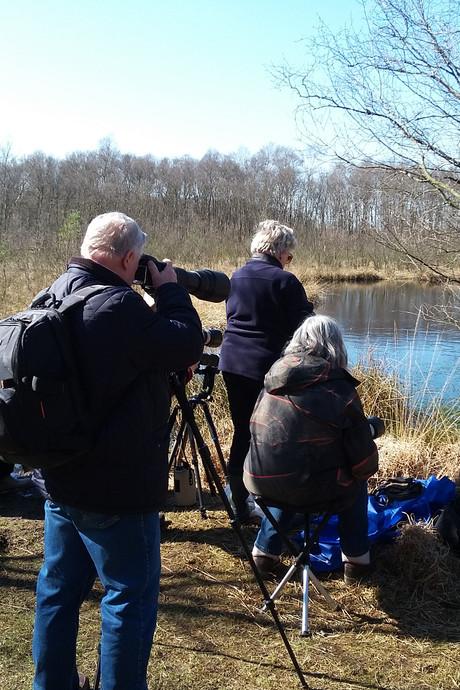 Fotografen uit hele land naar Engbertsdijksvenen voor blauwe kikker