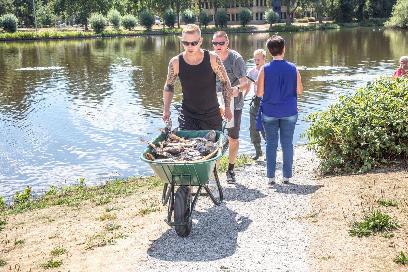 Dode vissen werden zondag en maandag in kruiwagens afgevoerd.