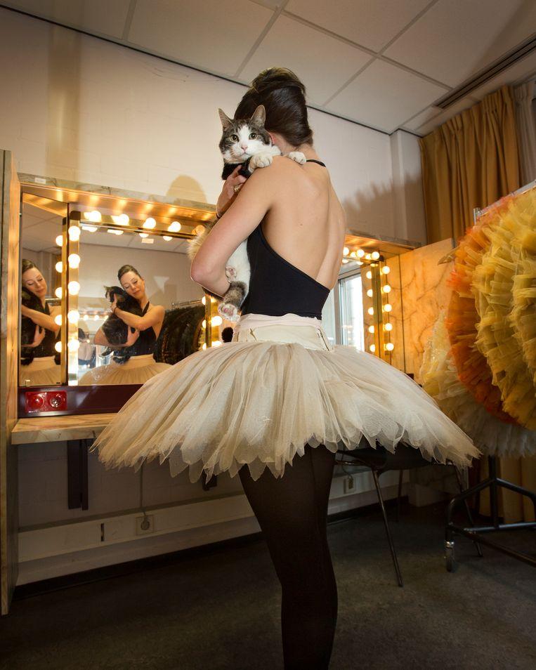 Kater Abatutu, die een rol speelt in 'Don Quichot', in de kleedkamer op de arm bij een van de danseressen. Beeld Maartje Geels