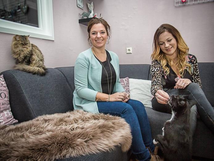 Chantal van der Laan (links) en Quinta Koolen willen hun voorliefde voor katten en ondernemen samenbrengen, door een kattencafé te openen in het centrum van Goes. Foto Marcelle Davidse