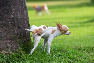 kleine-hondjes-liegen-over-hun-lengte
