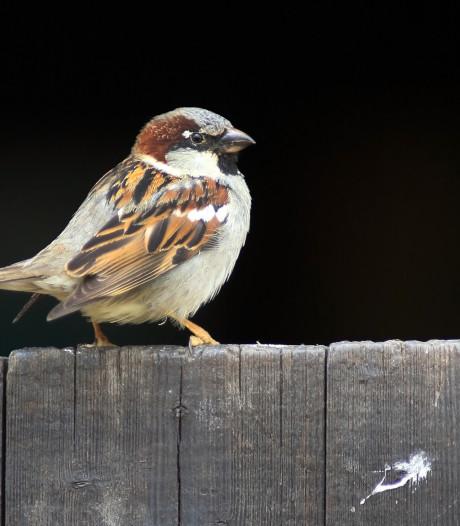 De Vogelatlas laat zien dat de hardste klappen op het boerenland vallen