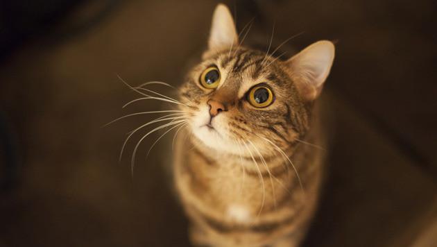 Archiefbeeld van een kat, dit is niet Doris.