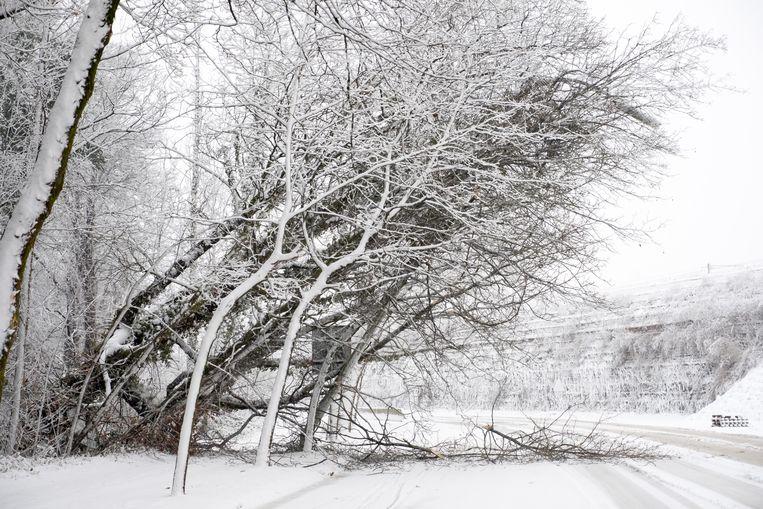 Takken breken af onder het gewicht van de sneeuw langs de Colomalaan in Mechelen.