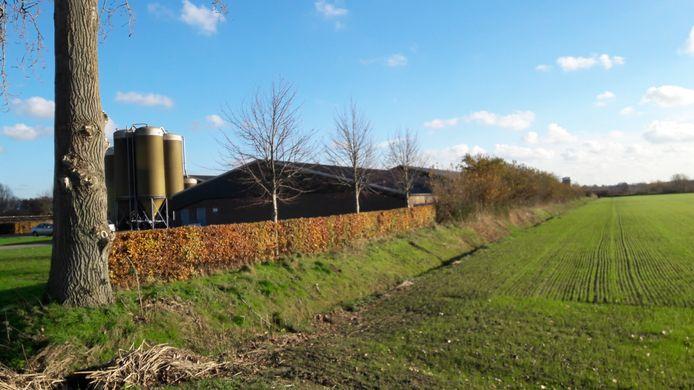De varkenshouderij van Van Dijck aan de Donkhorst in Moergestel