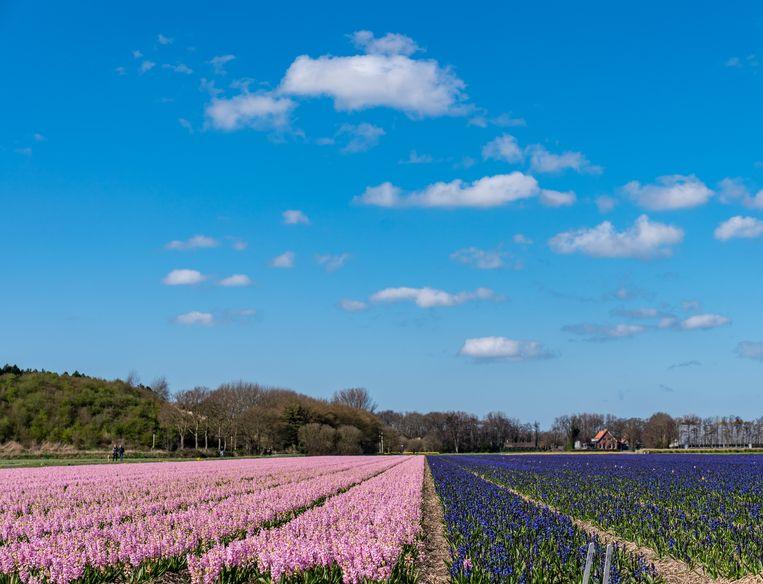 De lente is in aantocht en de bloemenvelden staan weer volop in bloei.  Beeld BSR Agency