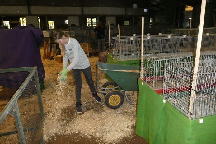 Zaagsel op de grond en in de kooien. Leerlingen van de praktijkschool van het Elde helpen mee met de opbouw van de tentoonstelling van ESKV in manege De Molenheide.