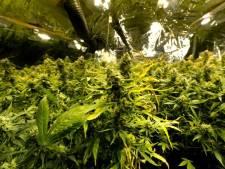Growshop herbergt wietplantage van 7.000 plantjes