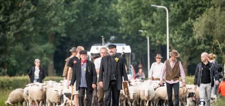 Schapenmarkt Hellendoorn: in een kudde van de berg af