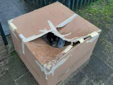 Dierenambulance Utrecht vindt doos met gedumpte kittens in de kou