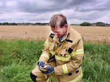 Brandweer redt vier eendjes uit gemaal Heinenoord