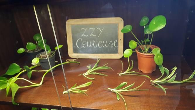 Cultuurhuis De Zeepziederij geeft plantenstekjes weg ter adoptie