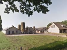 Varkensboer Machiel  Coppens mag in Boekel meer varkens houden