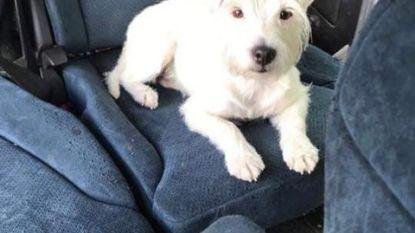 UPDATE: Hondje Courage teruggevonden