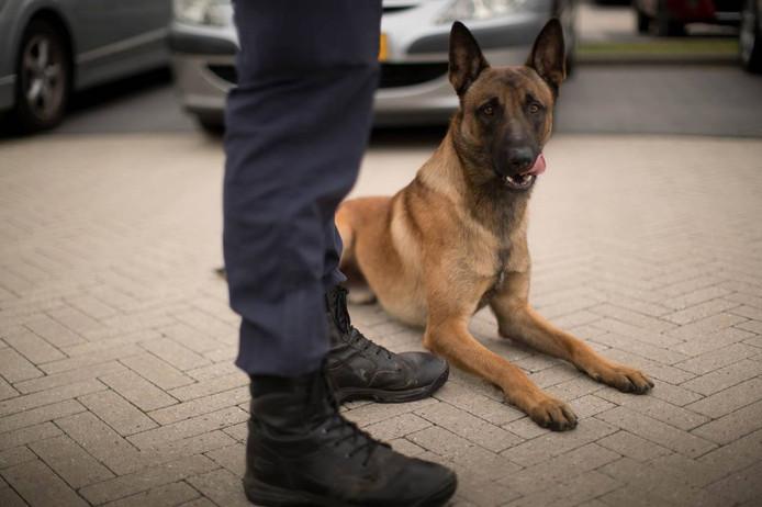 Mechelse herder, foto ter illustratie. De hond is niet Ziva.