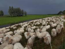 Waterschap: Al het vee van de dijken af