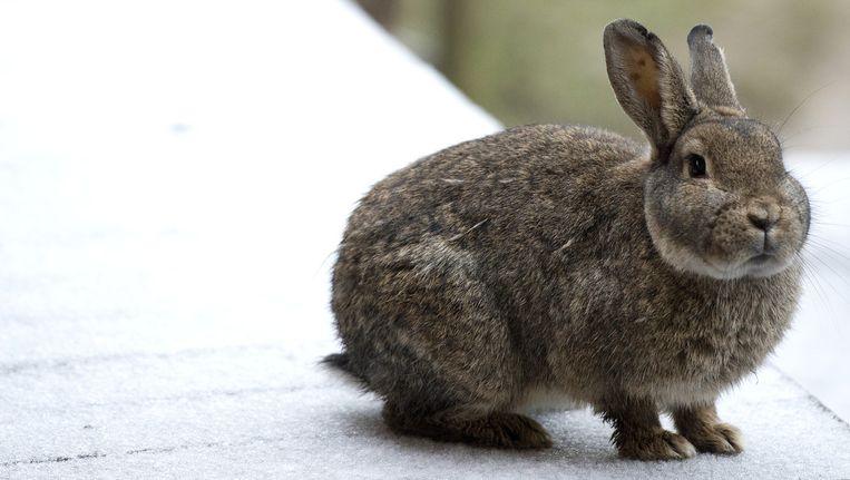 Achttien dierenorganisaties willen dat dieren niet langer onderdeel zijn van het kerstdiner. Beeld anp