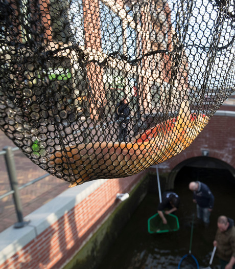 Zijn alle goudvissen weg uit gracht Veenendaal?