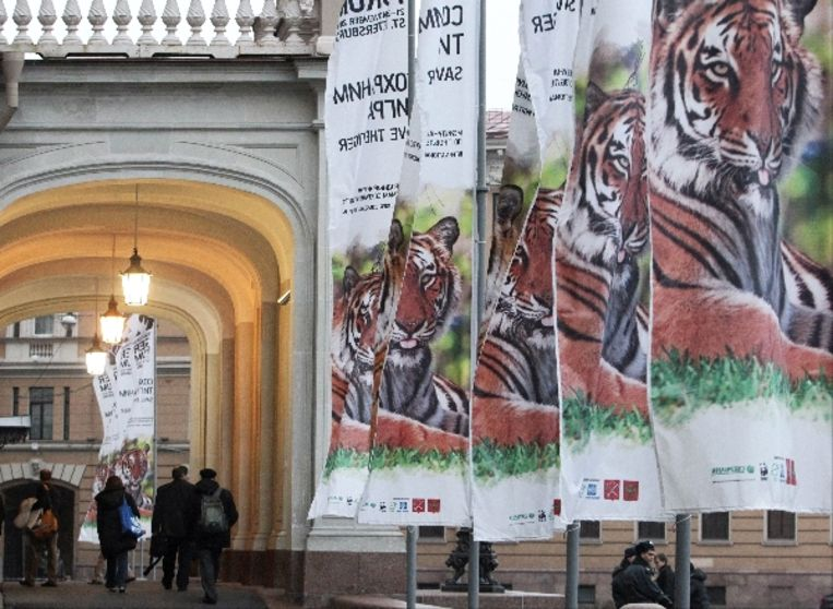 Tiger Forum in Sint-Petersburg. (EPA) Beeld EPA