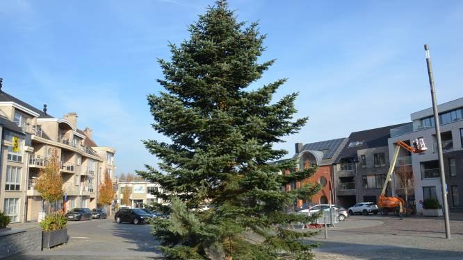 Grote kerstboom prijkt al in elke Denderleeuwse deelgemeente