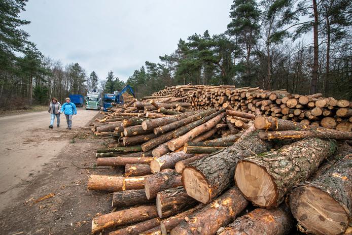Van de stammen van de gekapte bomen langs de A1 wordt zaagsel gemaakt.